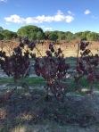Pegos Claros vineyard